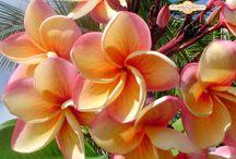 Flowers / by Annie Lemmerman