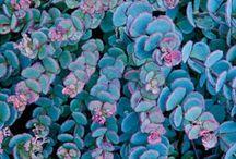 Garden / by Rebecca Hicks