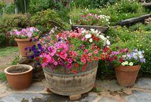 Gardening / by Linda Townes