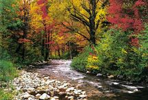 I Love Autumn / by Michelle Janes