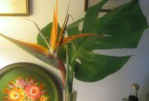FLOWERS & PLANTS / by Gloria C.