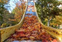Fall Foliage / Fall foliage photos you can enjoy all season long / by The Davey Tree Expert Company