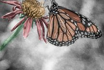Digital Paintings / by Nature's Images By Design