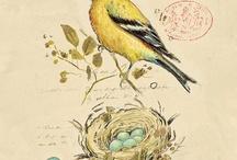 birds / by Tera Callihan