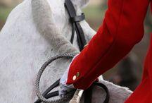 Equestrian / by Letto M
