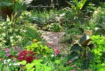 Garden Ideas / by Mikey Johnson