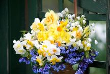Floral displays / by Helen Mills