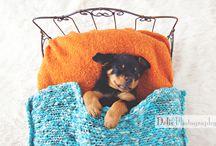 Newborn puppy / by Corinne Delis