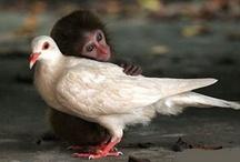 interspecies love / by wild rose
