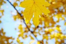 Yellow Happy Yellow / by Joni Robbins