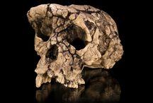 Paleoanthropology / Paleoantropología / by Dolo Espinosa