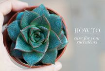 Succulents*** / by Katie Carver