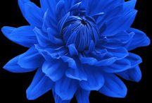 Best flowers / by Marina B
