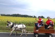 Farm & Garden Events / by farm carolina