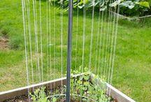 Garden tips and Ideas / by Melanie Otani