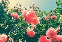 Summer! / by Hannah Roycroft