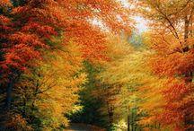 autumnal color / by Sandi White Thomas