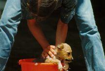 Doggy Stuff / by Randa Clay