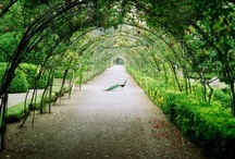 Arbors / by Paul J. Ciener Botanical Garden