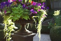Container garden design  / Designs for container gardens for my new backyard landscaping  / by Audrey Kerchner Studios