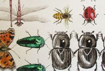 Bugs / by Rachel Oo