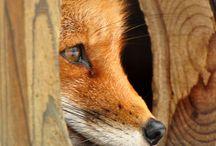 ANIMALS / animals  / by Manicura Creativa