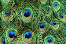 Bird Study / by Brooke Ogletree