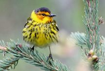 I Just Love Birds / by Tami Eggensperger