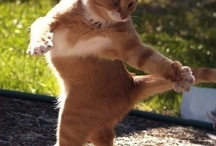 Kitties! / by Codie Bone