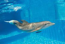 Dolphins / by Rainey Randolph