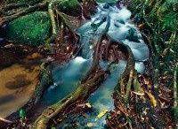 rainforests / by Sydney Vegezzi