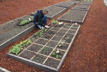 Gardening - Square Foot Gardening / I might not be a master at square foot gardening, but I have a ton of experience. Here are a bunch of posts about how you can become a square foot gardening pro yourself! / by Mavis Butterfield