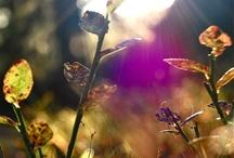 My photos / by Julie Sandtangen Hansen