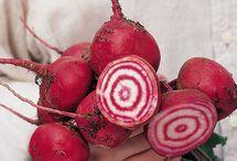Vegetable Gardening / by Poundland UK
