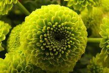 Green / by Joan Hawley