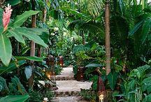 tropical garden inspiration / by Nicoleen Agnello