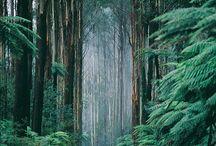 Beautiful Nature / by Ashley E