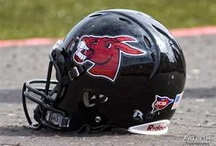 UCM Mules! / by Cathy Sahlfeld