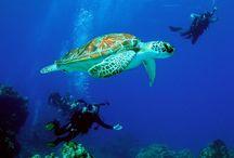 Scuba diving / by Isabel Adamus