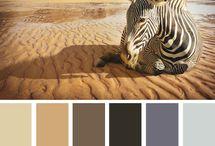 Color Inspiration / by Jennifer DeMass Evangelista