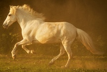 beautiful horses / by Emily Carlson