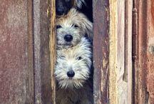 Dogs / by shun ikeda
