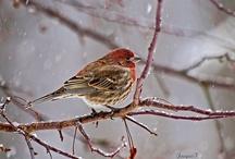 Birds / by Anita Bolyard