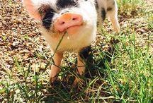 Too Cute! / by Deborah Winter