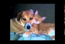 Cute Videos / Cute videos - animals, babies and kids - oh my! / by Sherry Ochoa-Rounkles