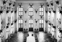 Taxidermy / by Deer & Deer Hunting