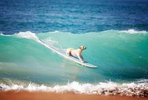 When in doubt, paddle out! / by Molly Ottersen