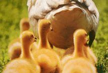 Animals 2 / by Belinda Roussel