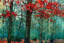 Autumn / by Alyce Maglaris