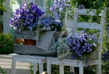 Container Gardening / by Kimberly Cook